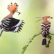 Winnaar Fotowedstrijd Dieren bekend!  © artikel, winnaar, dieren