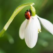 Lentekriebels - Fotograferen in het voorjaar
