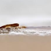 5 tips voor strandfotografie © tips, artikel, strand