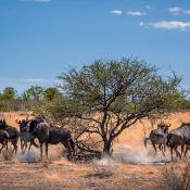 Dwars door Namibië - Op fotosafari met de Panasonic Lumix G9 © IDG NL