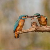 Dit zijn de mooiste foto's op Zoom.nl van maart 2020