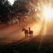 6 Tips voor fotograferen in de mist © mist,misty,morning