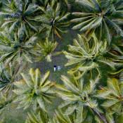 Duizelingwekkend dronegebruik bij bruidsfotografie  © bruidsfotografie, drone, afstand, tropisch