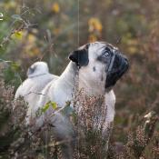 De workflow van een hondenfotograaf © IDG NL
