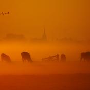 Basiscursus Landschapsfotografie in Nederland © landschap, holland, goud