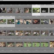 Lightroom drieluik: module Ontwikkelen deel 1 © importeren, lightroom, raw, beeldbewerking, adobe, blog