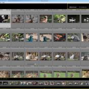 Aan de slag met Adobe Lightroom: Hoe begin je? © Lightroom 5, Adobe, blog, bibliotheek, archiveren, archief