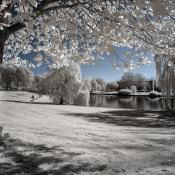 Tips om te experimenten met fotografie tijdens de vakantie  © infrarood, bladeren, vakantieexperimenten