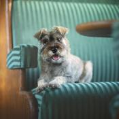 Binnen aan de slag: zo maak je een portret van je huisdier © IDG NL