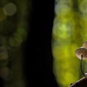 5 tips voor de mooiste paddenstoelen macrofoto's