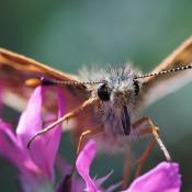 Hoe een kleine wereld groot wordt: LAOWA 60 mm 2:1 Macro © vlinder, blog, erik