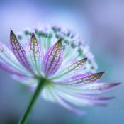 De meest fotogenieke bloemen voor macrofotografie © macro, bloem, zeeuws, knoopje