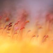 5 inspirerende onderwerpen voor Macrofotografie
