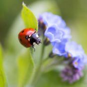Deze 5 fotografie onderwerpen vind je in jouw tuin