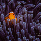 Unieke workshop onderwaterfotografie met SIGMA © Robert Smits