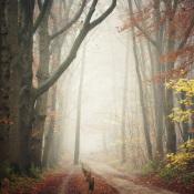 10 fotolocaties voor het fotograferen van bossen © IDG NL