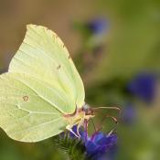Tips: Natuur fotograferen in maart © tips, inspiratie, blog, maart