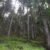 Fotodokter: de nabewerking van een boslandschap © fotodokter, boslandschap, belichting