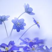 Expertuitdaging: De ontluikende lente vastleggen © voorjaar, bloemen, licht