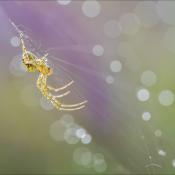 Spinnen fotograferen doe je zo