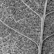 Basiscursus patronen in de natuur herkennen © blad, nerven, abstract, patroon