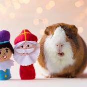 8 perfecte Sinterklaascadeaus voor fotografen
