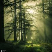 Tips voor natuurfotografie © artikel, tips, natuurfotografie