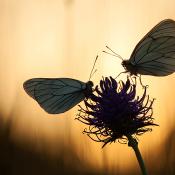 Tips om natuur te fotograferen per maand | Natuurfotografie © macro, vlinders, avond