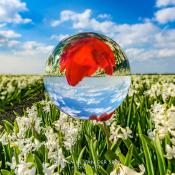 Tien onmisbare accessoires voor elke fotograaf © glas, bol, bloemen