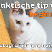 Hoe fotografeer je je huisdier? | Praktische tip voor beginners © thumbnail, praktische, tip