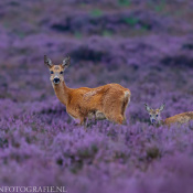 Tips: Natuur fotograferen in augustus © natuurfotografie, augustus, maand, periode, blog