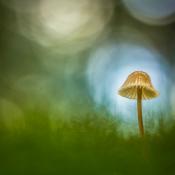 Basisinstellingen voor mooie paddenstoelenfoto's © diafragma, paddenstoel, bokeh
