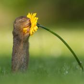 Wildlife fotograaf Dick van Duijn ging viraal met eekhoornfoto © Dick van Duijn