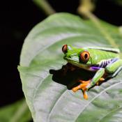 De Tamron 18-400mm op reis door Costa Rica © Simone Diederich