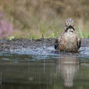 Fotografeer vogels in een vogelhut © gaai, blog, erik