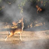 Quickstart: Je foto in mist hullen in Photoshop © quickstart, mist, nevel, na