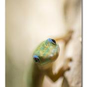 De beginnende fotograaf - Autofocus © focus, hagedis, scherp