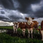 Fotograferen in de storm © tips, storm, regen, extreem weer