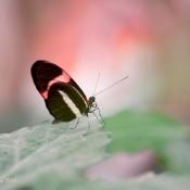 6 tips om vlinders te fotograferen © IDG NL