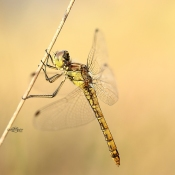 Welke natuur kun je in augustus fotograferen? © artikel, fotografie, augustus