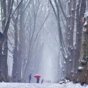 LIVE: De eerste sneeuw van 2021 is gevallen: foto's van Winter in Nederland 2021 © reshift