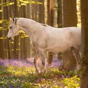 6 tips voor paardenfotografie