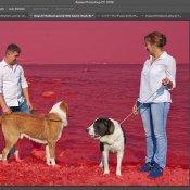 Een heel handige nieuwe onderwerp-selectietool in Photoshop CC!  © adobe, selectie, tool