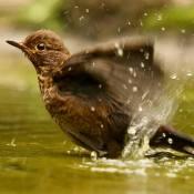 De resultaten van de expertuitdaging: Waanzinnige waterfoto's © water, merel, spetters