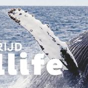 Laatste kans: Fotografiewedstrijd: Wildlife - Win een reis naar Canada!