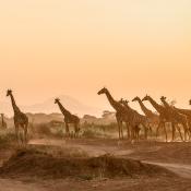 De populairste fotografie bestemmingen van 2019 © IDG NL