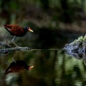 Top 10 locaties in Nederland voor een dagje uit - fotografie © avifauna, vogelpark, uitstapje