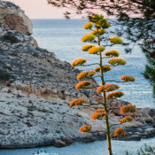 Naar Ibiza met de Thule DSLR camera bag backpack © Rob Creemers - Case Logic - ii