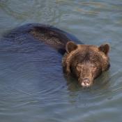 live lezersreisverslag vanuit Canada DEEL 2 | Paradijs voor wildlife-fotograferen  | door GoCanada en Air Transat © Reshift