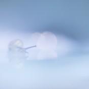 Expertuitdaging: Fotograferen met nauwelijks contrast © slak, macro, mist